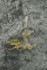 Sunfish - Chester Frink