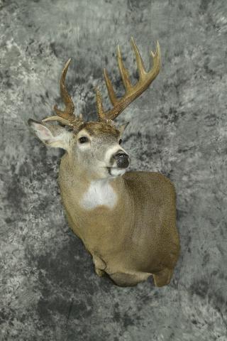 Whitetail Deer - Royce Larson