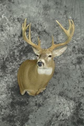 Whitetail Deer - Kirk Peterson