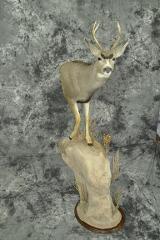 Mule Deer - Larry O'Malley