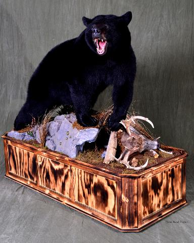 Black Bear - Nick Genereux