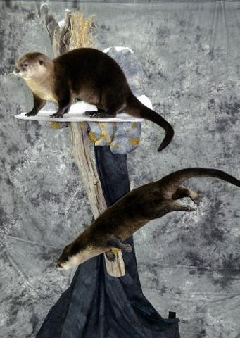 Otters - Thomas Hansen