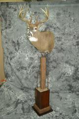 Whitetail Deer - Lance Johnson