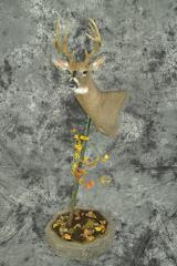 Whitetail Deer - Daniel Bertilrud