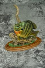 Sunfish - Randy Wold