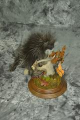 Porcupine - Scott Vohnoutka