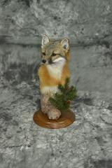 Grey fox - Haylee Zwick