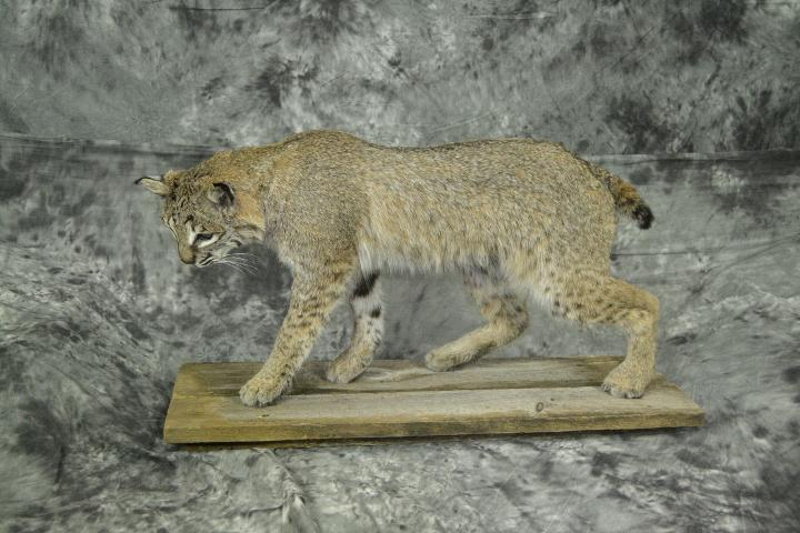 Bobcat - Derek Sanderson