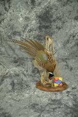 Pheasant - Neal Hagberg