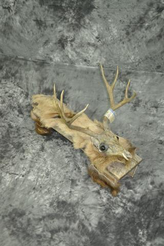 Mule Deer Foot Stool - Arts and Crafts - Caleb Beem