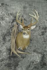 Whitetail Deer - Mitch Beem