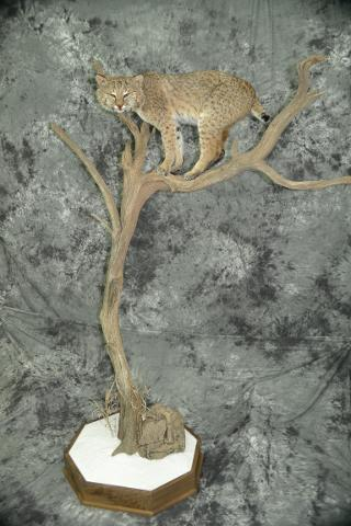 Bobcat - Pat Cherl Grimes