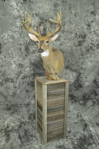Whitetail Deer - Patrick Kjemhus