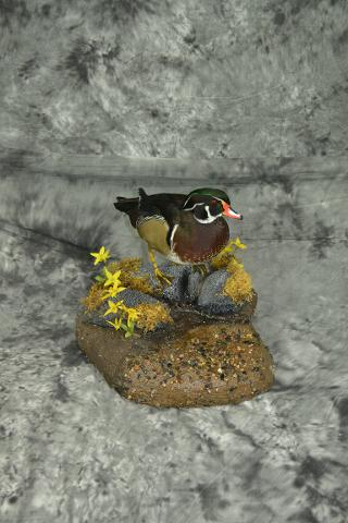 Wood Duck - James Dirkes