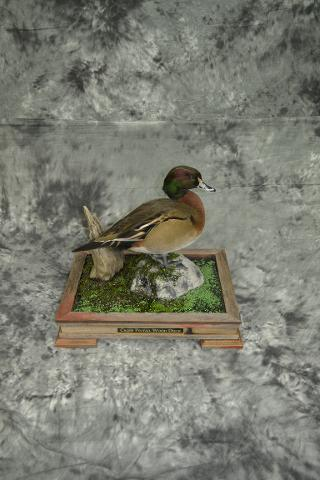 Ponytail Wood Duck Cross - Mike Pendzimas