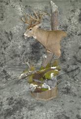 Whitetail Deer by Garrett Sunram